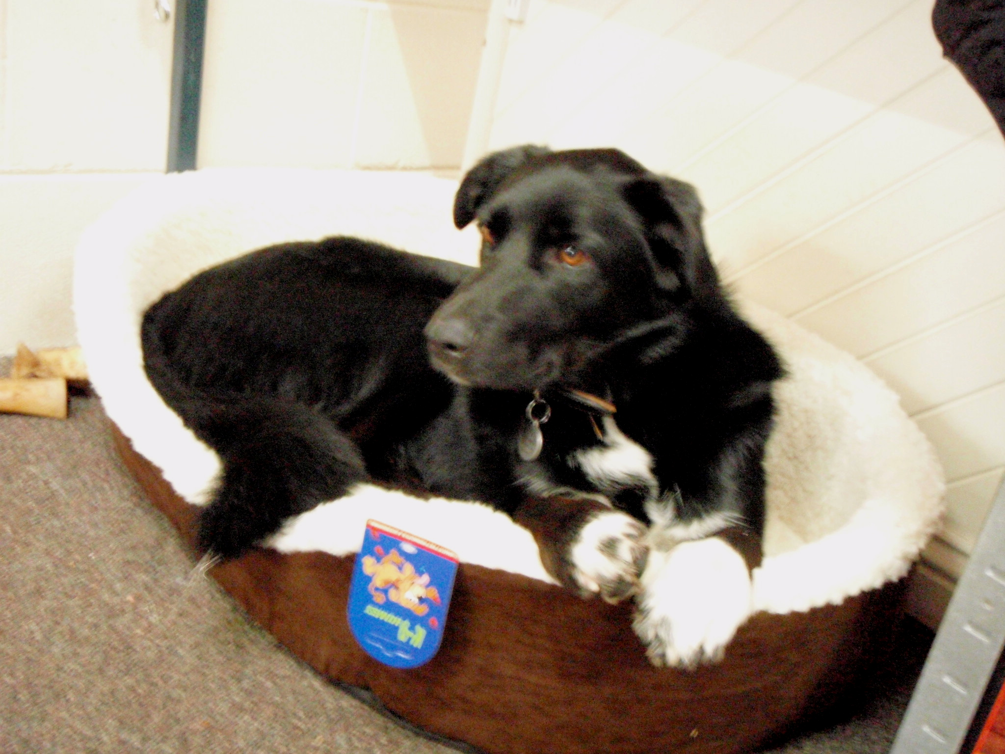 What kind of bed should I for my dog My Puppy Club